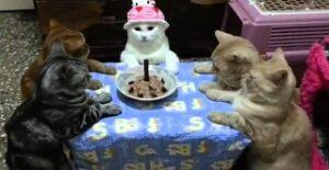 Anni del gatto in anni umani