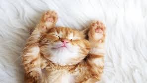 Cosa non fare a un gatto
