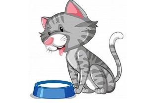 Cosa non possono mangiare i gatti