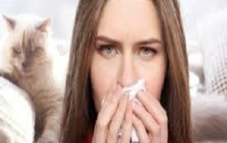 Gatti anallergici