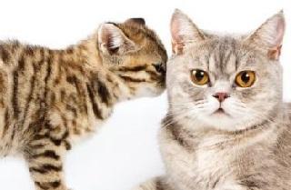 Gusto olfatto e vista del gatto