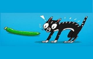 I gatti hanno paura dei cetrioli