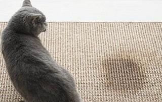 Il gatto fa pipi fuori dalla lettiera