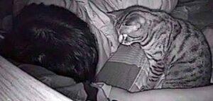 Il gatto non dorme la notte