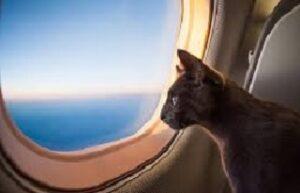 Viaggiare con il proprio gatto in aereo