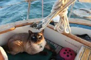 Viaggiare con il proprio gatto in aereo in barca o nave