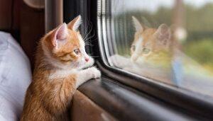 Viaggiare con il proprio gatto in treno e autobus