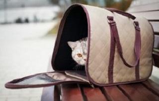 Viaggiare con il proprio gatto
