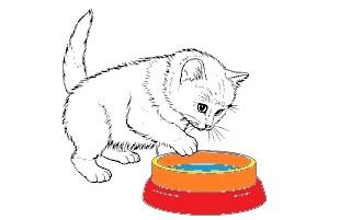 ciotole per gatti come scegliere