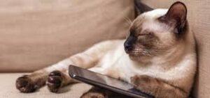 comunicare col gatto