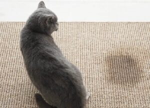 diabete nei gatti