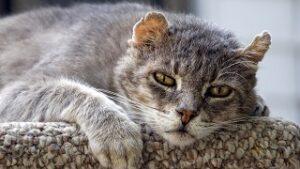 età di un Gatto