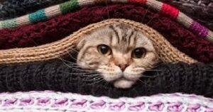 gatto ha freddo