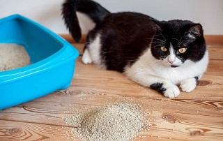 l gatto butta la sabbia fuori dalla lettiera