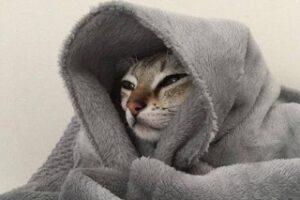 proteggere il gatto dal freddo