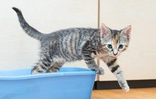 Gattino con diarrea