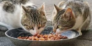 Quanto e quante volte deve mangiare un gatto