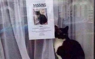 Gatto perso