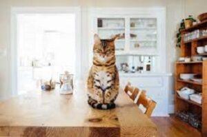 Gatto dominante