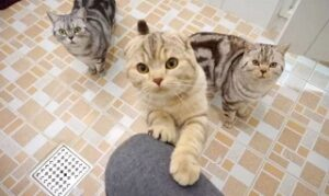 Gatto mi segue in bagno