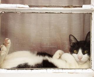 balcone sicuro per i gatti