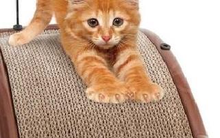 Gatti graffiano