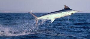 animali più veloci al mondo che nuotano