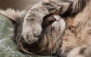Incontinenza del gatto