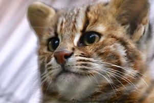 l'aspettativa di vita  gatto